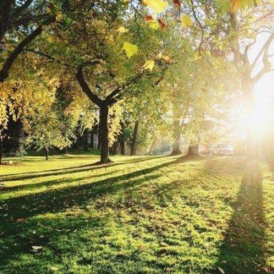 1175期陽光照進公園裡